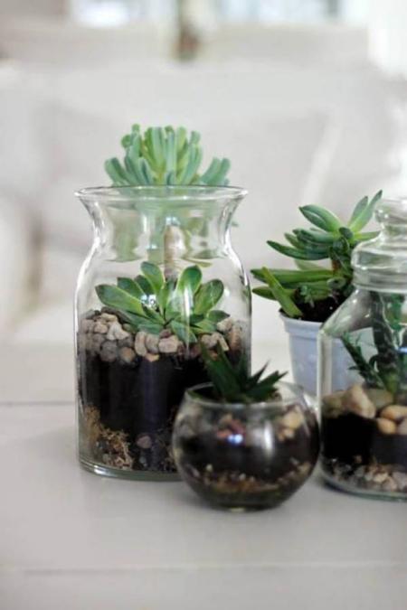 terrarium trois couches pour les plantes