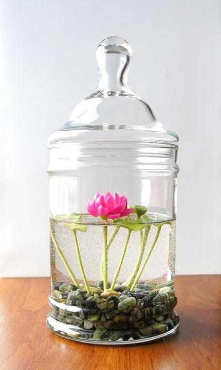 terrarium un bocal avec couvercle