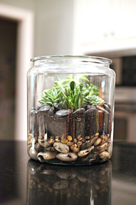 terrarium un bocal avec succulents