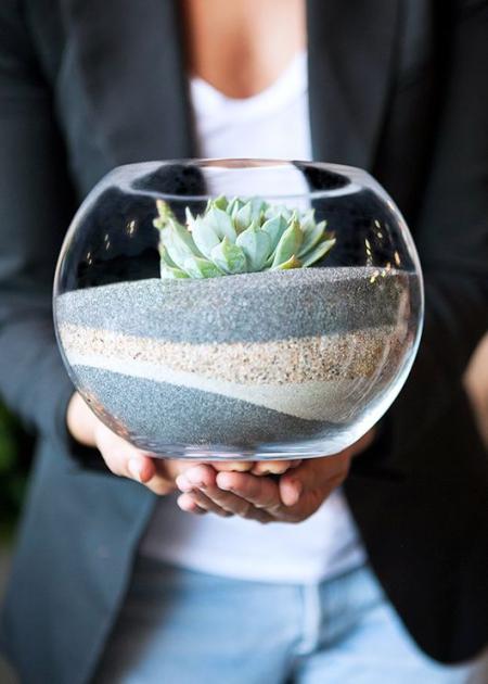 terrarium un récipient rond en verre