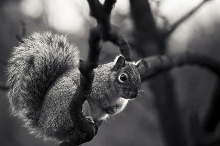 équreuil photographie noir et blanc