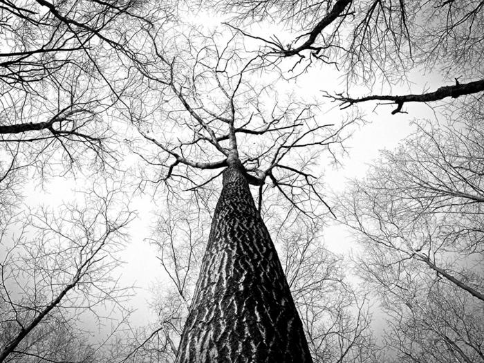 arbres en hiver photographie noir et blanc