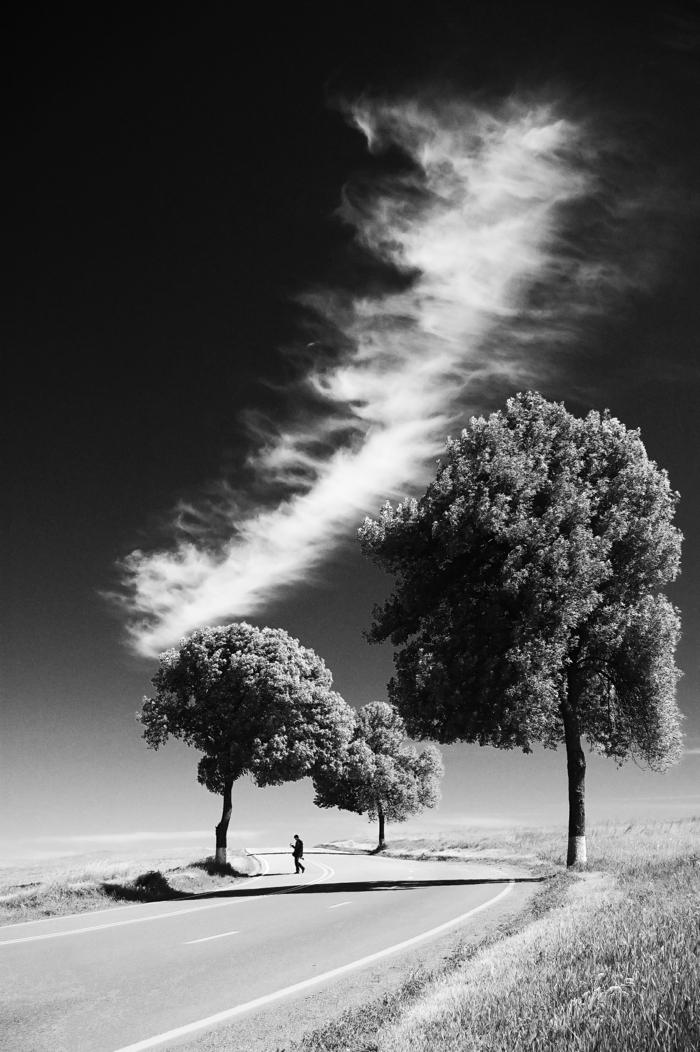 arbres et nuages photographie noir et blanc