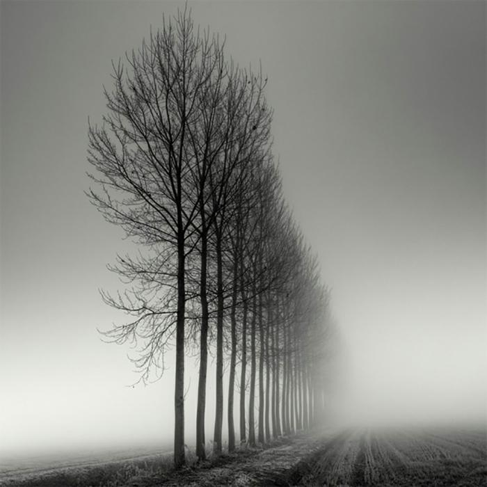 arbres paysage photographie noir et blanc