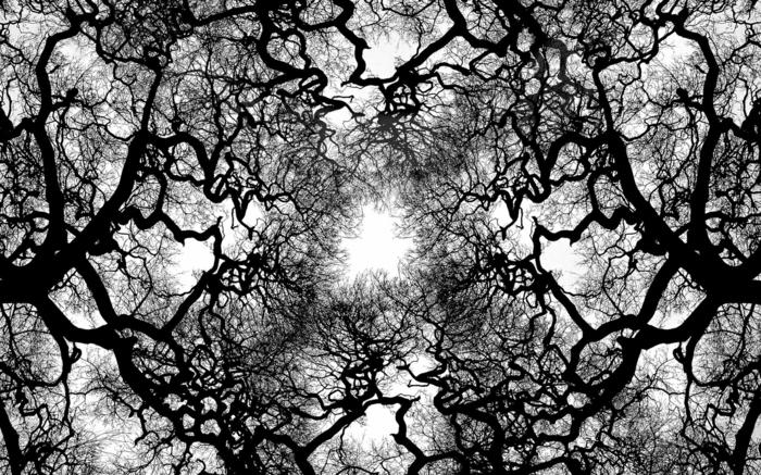 arbres sur fond blanc photographie noir et blanc