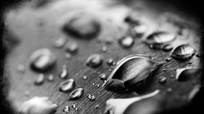 eau sur une feuille photographie noir et blanc