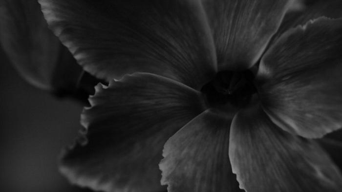 fleur photographie noir et blanc