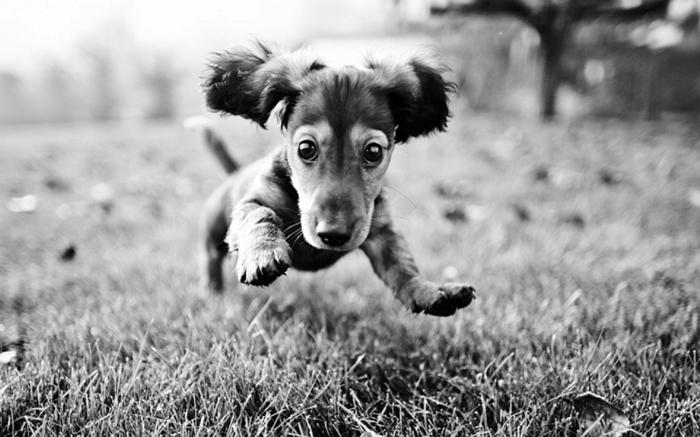joli chien photographie noir et blanc