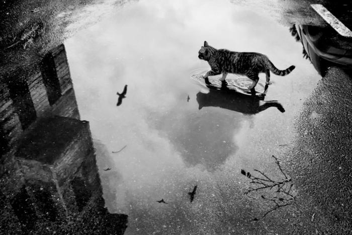 le chat photographie noir et blanc
