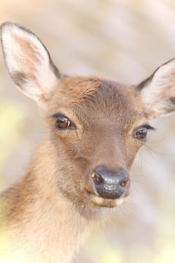 maquillage yeux de biche un animal doux