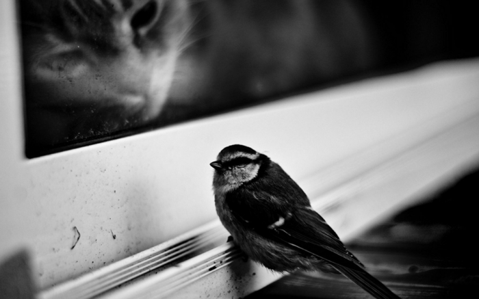 oiseau et chat photographie noir et blanc