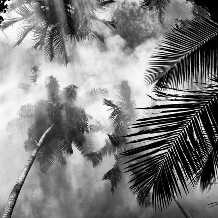 palmes photographie noir et blanc