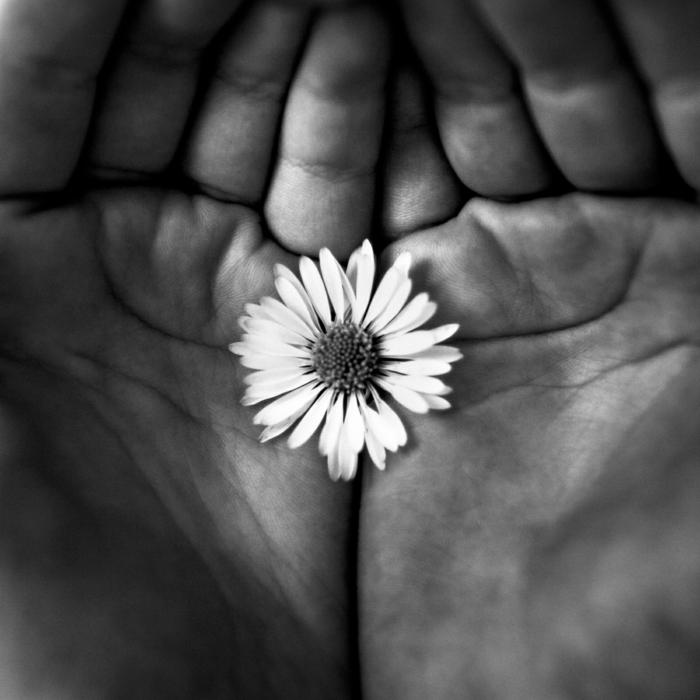 petite fleur photographie noir et blanc