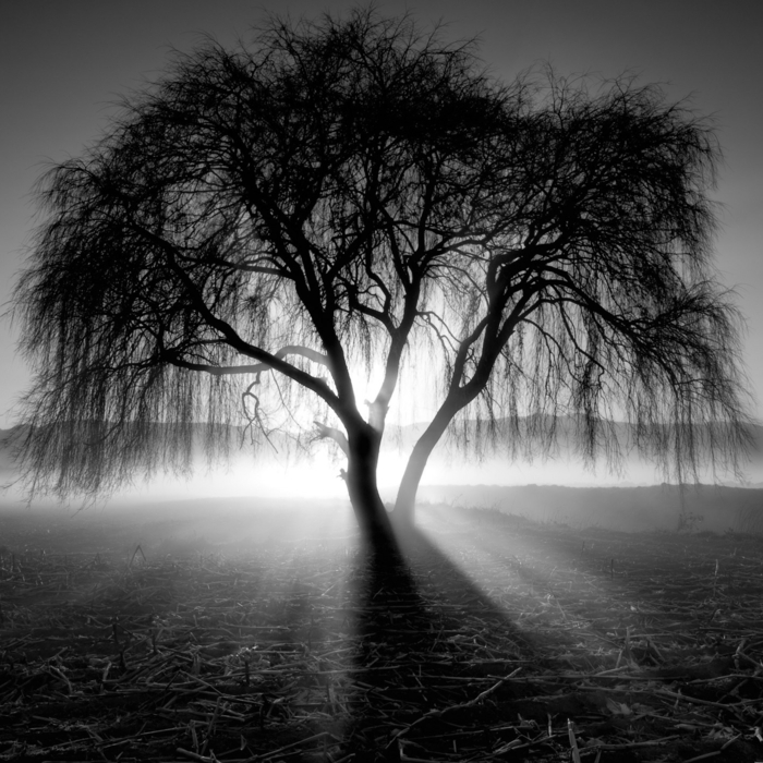 photographie noir et blanc arbre et rayons de soleil