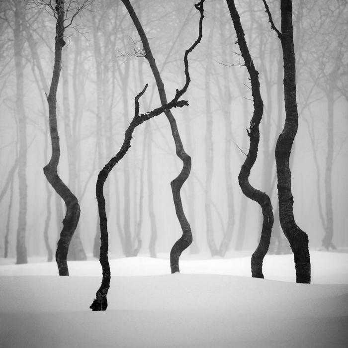 photographie noir et blanc arbres en hiver