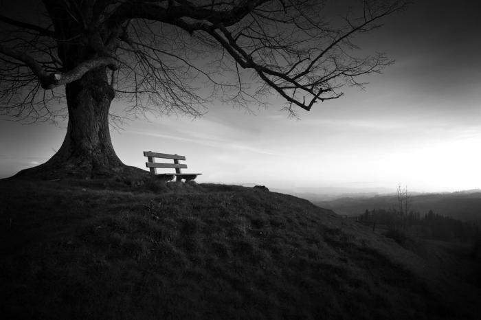 photographie noir et blanc banquette sous l'arbre