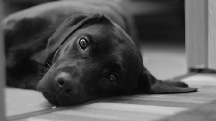 photographie noir et blanc chien