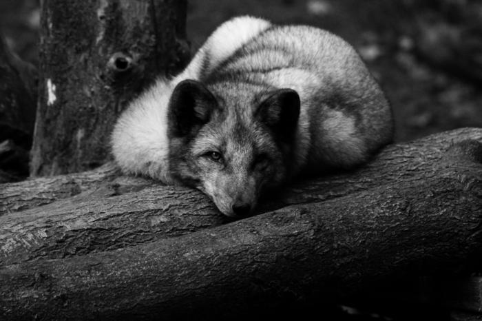 photographie noir et blanc déco maison idée