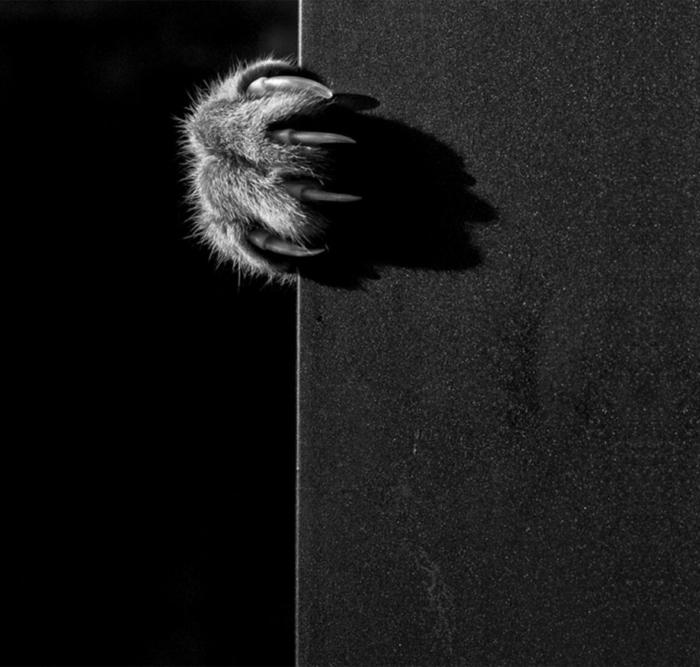 photographie noir et blanc patte de chat