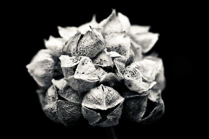 plante photographie noir et blanc idée