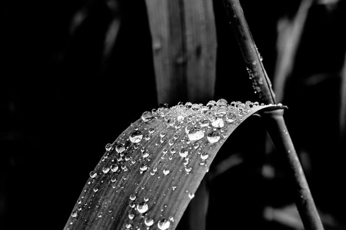 plante photographie noir et blanc