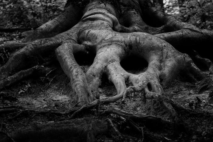 racins d'arbre photographie noir et blanc