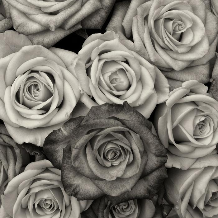 roses photographie noir et blanc
