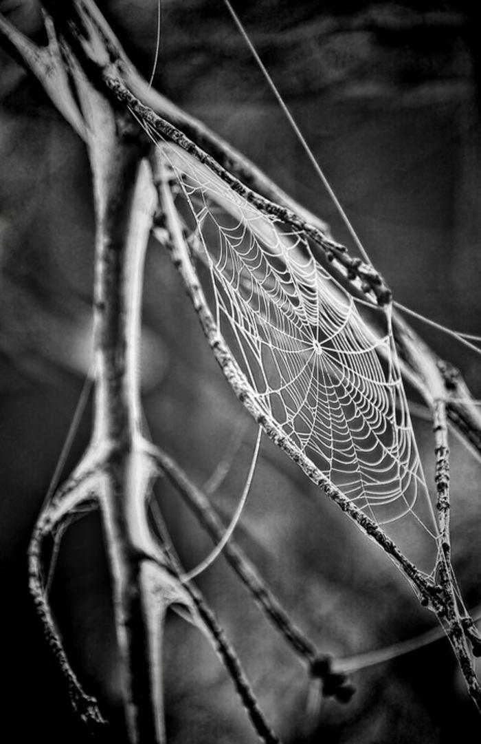 toile d'araignée photographie noir et blanc