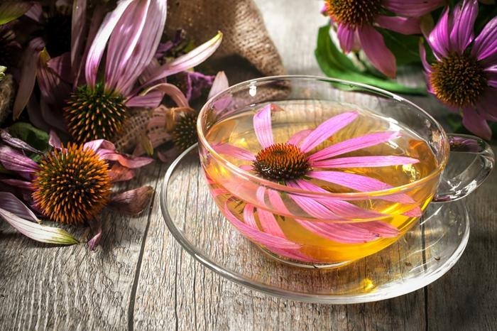 échinacée thé pour combattre le rhume