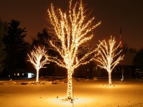 éclairage Noël extérieur arbres magiques