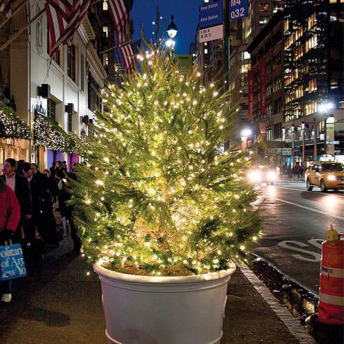 éclairage Noël extérieur sapin vert dans un grand pot