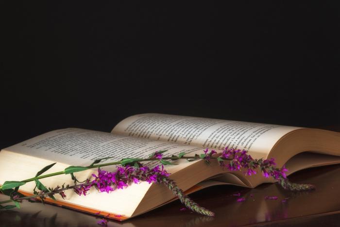 cadeau Noël copine un livre qui séduit