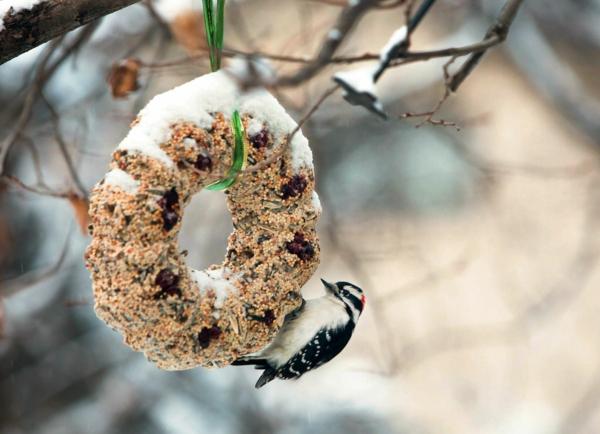 diy couronne noël de graines d'oiseaux mangeoire oiseaux