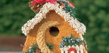 diy mangeoire oiseaux comestible
