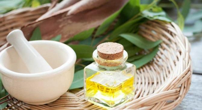 huile essentielle d'eucalyptus pour combattre le rhume