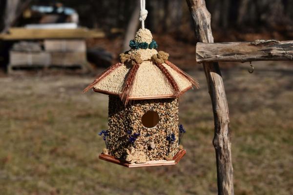 idée diy mangeoire oiseaux gélatine graines