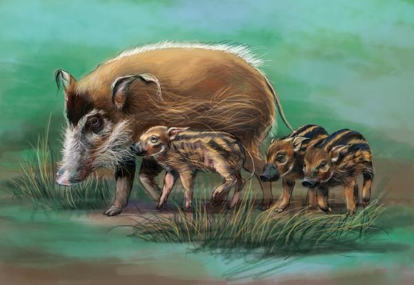 année du cochon truie et ses petits