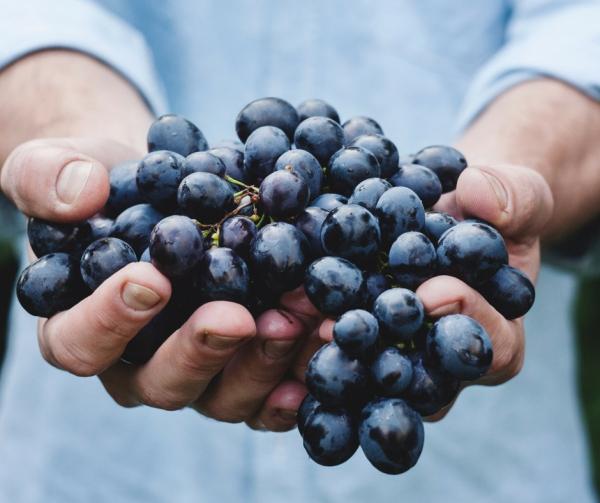 huile de pépins de raisin du raisin noir