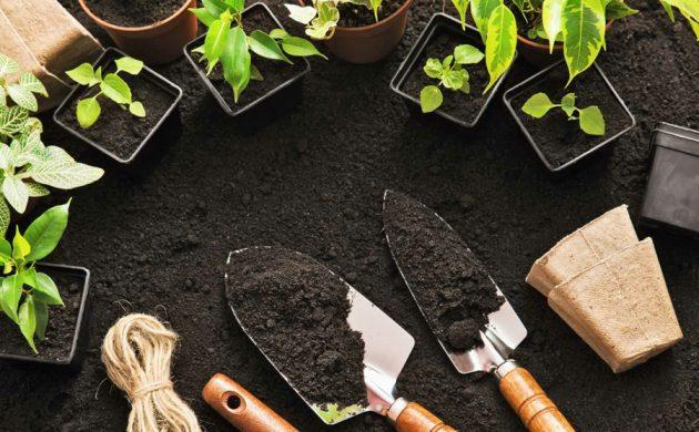 jardinage pour les nuls