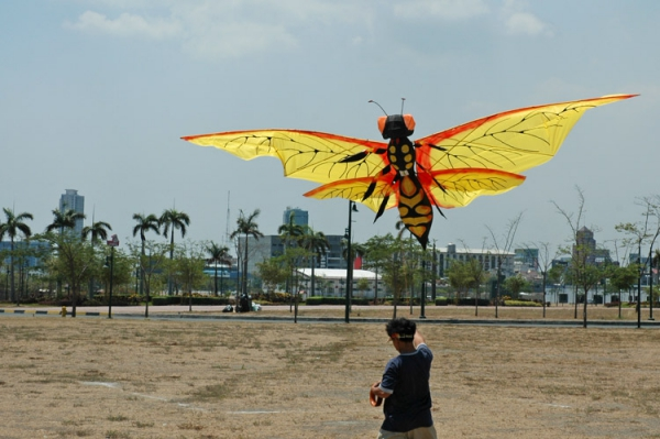 cerf-volant papillon gigantesque