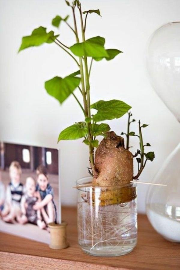 déco plante aquatique betterave