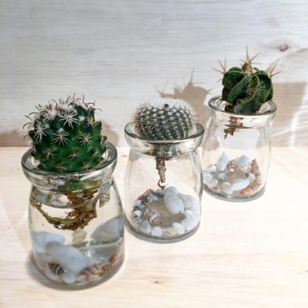 déco plante aquatique coquillage