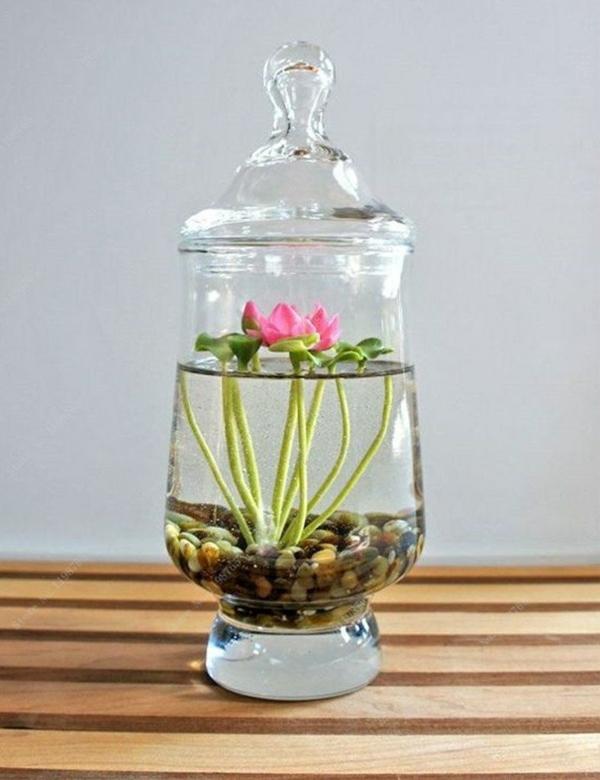 déco plante aquatique nénuphar