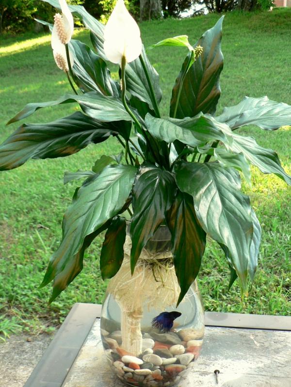 déco plante aquatique spathiphyllum