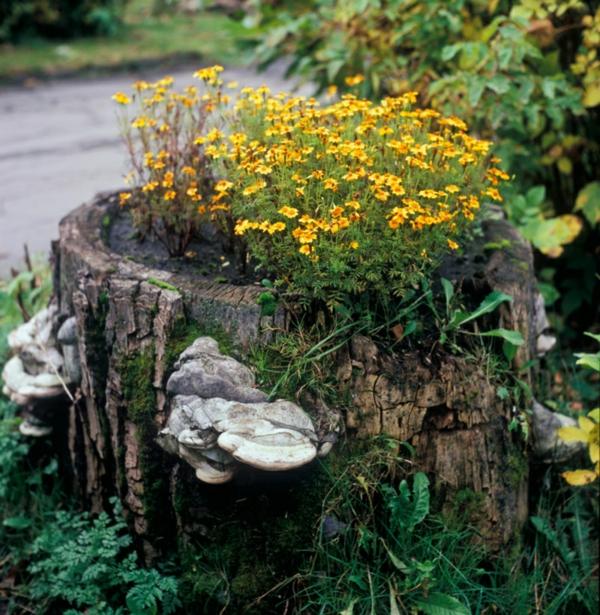 décorer son jardin avec des objets de récupération souche