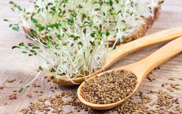 diy graines germées alfalfa