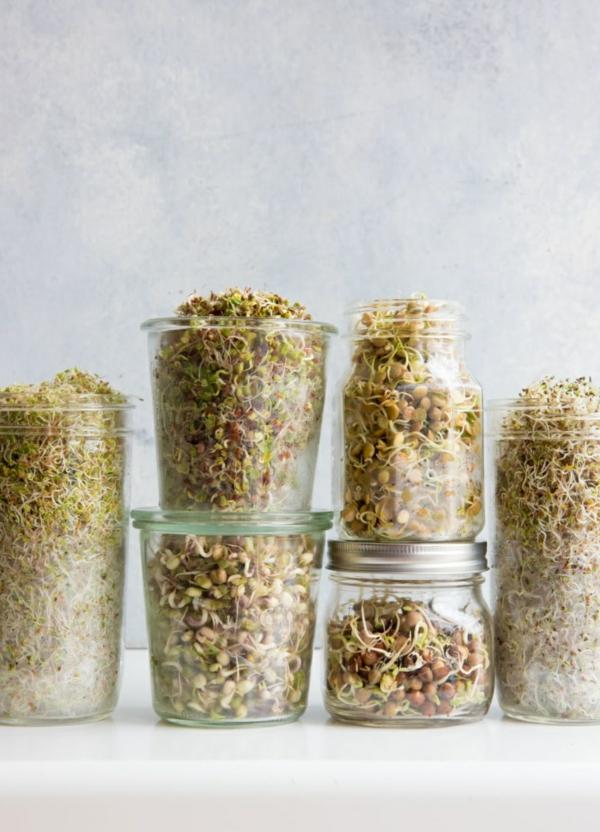 diy graines germées maison