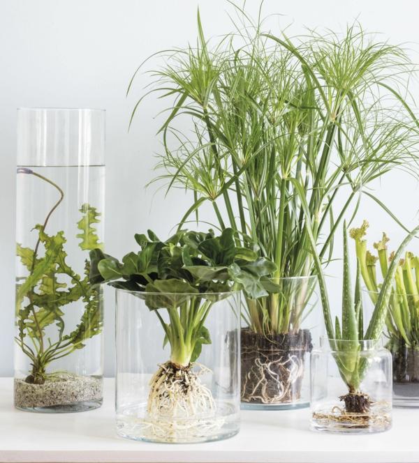 espèces de plante aquatique déco