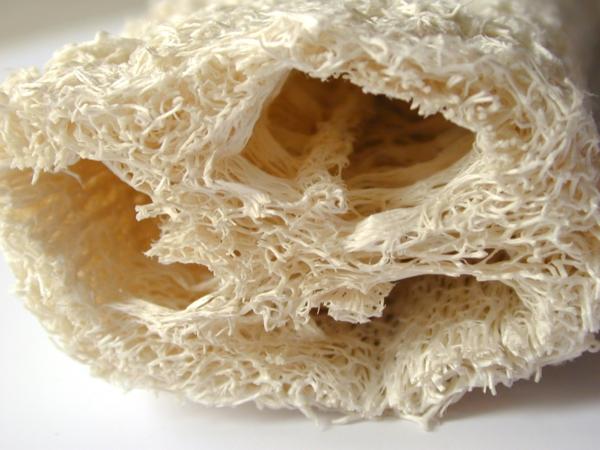 fibres végétales éponge luffa