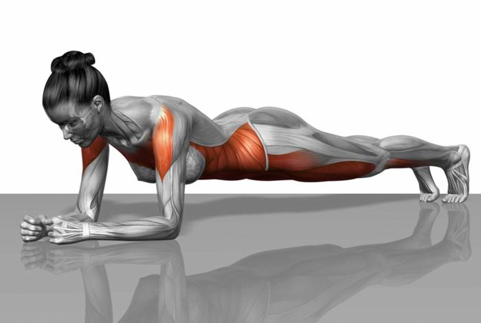 gainage abdo exercice planche stimulation des muscles